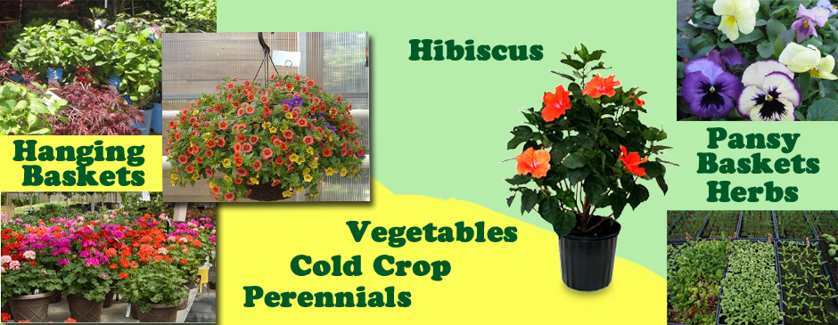 Hanging baskets, hibiscus, pansy baskets, herbs, vegetables, perennials
