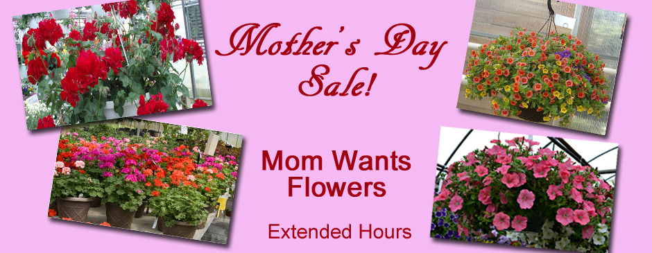 Mother's Day at Hazuza's Greenhouse
